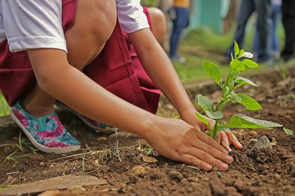 planting, environment, nature